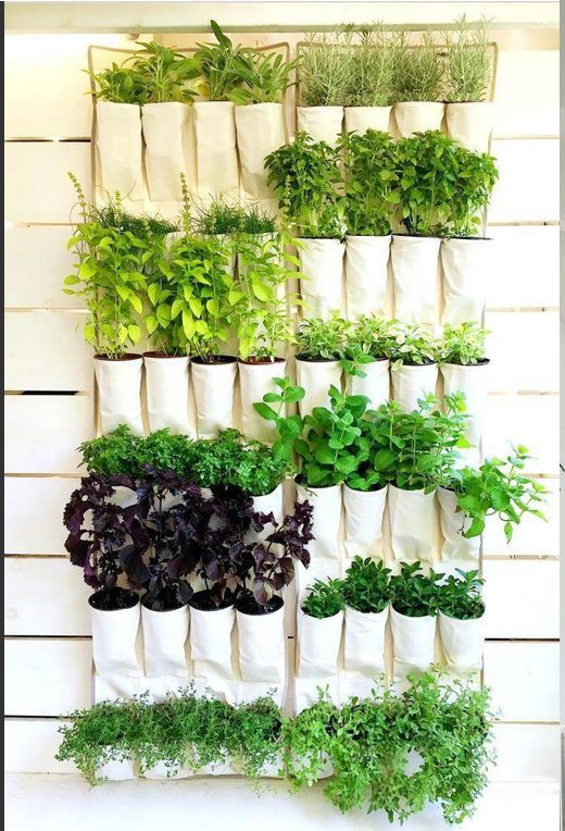 Do you need tips on indoor plants decor ideas? What are the best low maintenance indoor plants, indoor plants styling, best indoor plants decor living room. Indoor plant stands, indoor plant walls, indoor plnt display ideas. From tall, small and large indoor plants decor and styling. #indoorplants #indoorplantsdecor #indoorplantstyling #indoorplantsdecorlivingroom #plantwall