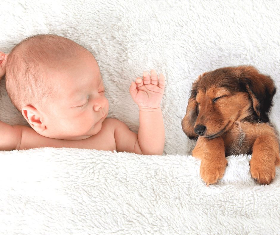 baby and a puppy sleeping belly up on a bed