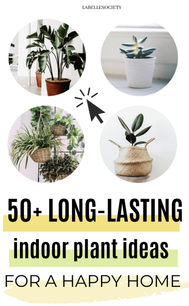 Do you need tips on indoor plants decor ideas? What are the best low maintenance indoor plants, indoor plants styling, best indoor plants decor living room. Indoor plant stands, indoor plant walls, indoor plnt display ideas. From tall, small and large indoor plants decor and styling. #indoorplants #plantwall #indoorplantsdecor #indoorplantstyling #indoorplantsdecorlivingroom